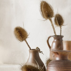 Alte Vasen mit Trockenblumen